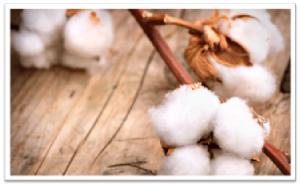 organic cotton baby clothes